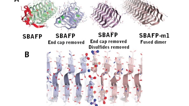 Engineering self-assembling amyloid fibers