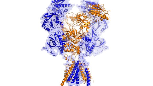 Unprecedented 3-D view of important brain receptor