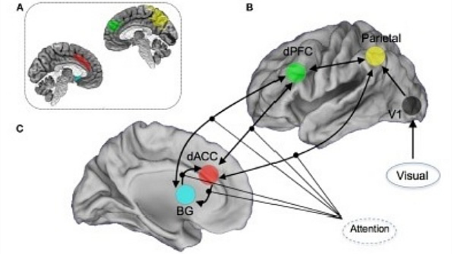 Children at risk for mental disorders experience communication breakdown in brain networks supporting attention, study shows