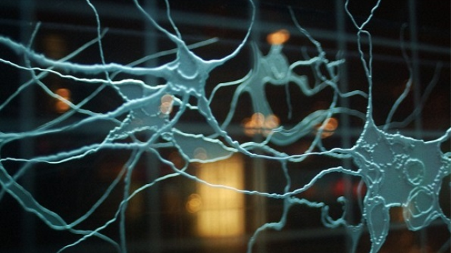 Biologists pave the way for improved epilepsy treatments