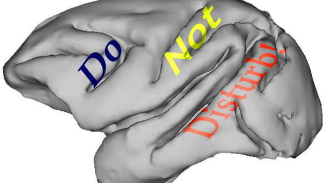 Do not disturb! How the brain filters out distractions