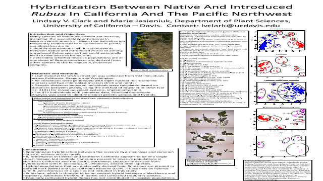 Hybridization between native and introduced Rubus in California and the Pacific Northwest