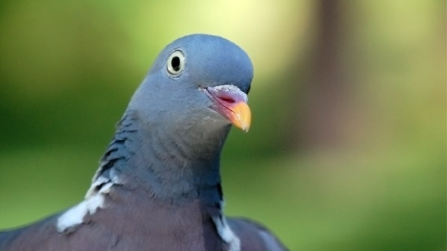 Pigeons, like humans, can place everyday things in categories