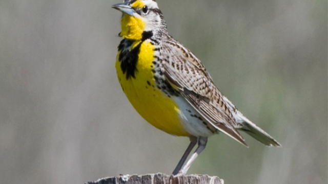 What songbirds tell us about how we learn