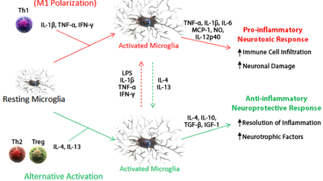 Microglial activation and neuroinflammation reagents from BioLegend