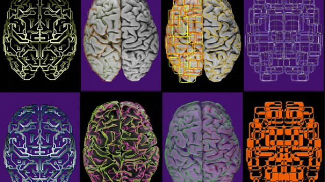 Neuroscientists launch resource aimed at breaking data barriers in brain research