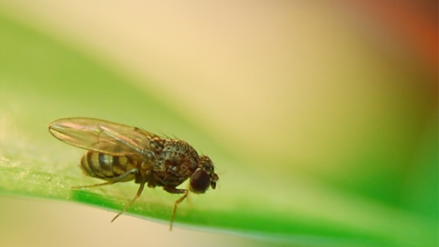 Fly method is epilepsy's ray of light
