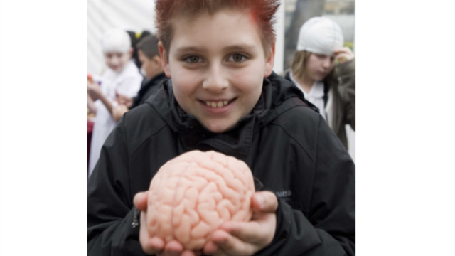 Myth-conceptions: How myths about the brain are hampering teaching