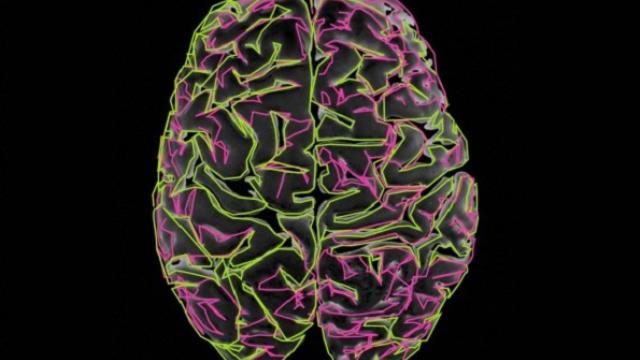 Brain simulation raises questions