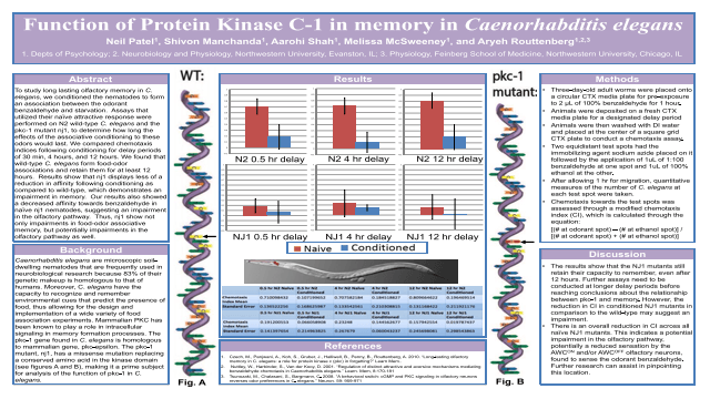 Function of Protein Kinase C-1 in memory in Caenorhabditis elegans