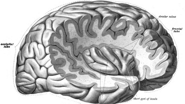Functional link found between brain region responsible for taste memory and area responsible for time and place memory