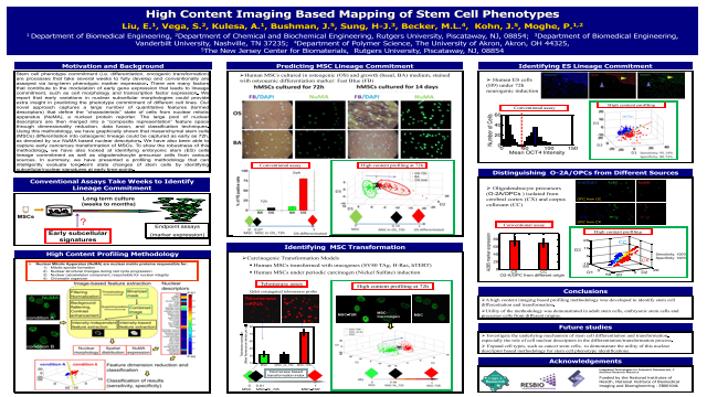 High content imaging based mapping of stem cell phenotypes