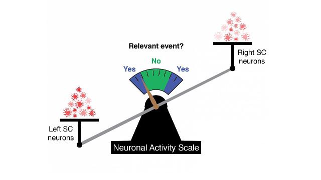 A Neural Code That Predicts Behavior