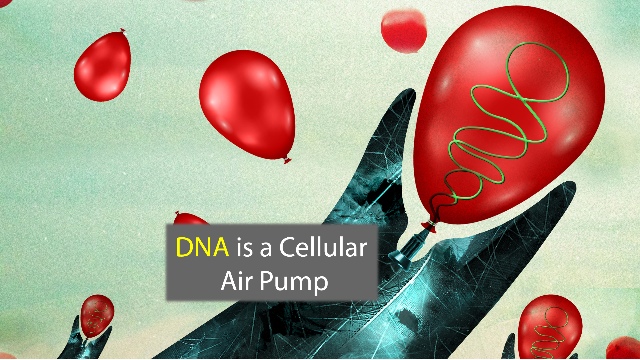 A New Role For DNA: The Cell's Air Pump