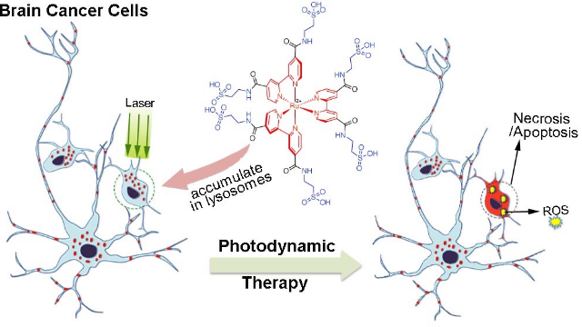 A Unique Amino Acid for Brain Cancer Therapy