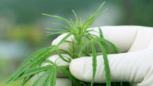 A2LA Accredits First Rec Cannabis Lab in Alaska