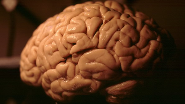 Alzheimer's disease is thought to be accelerated by an abnormal build-up of fat in the brain