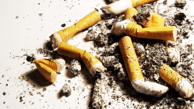 Nicotine-chomping bacteria may hold key to anti-smoking therapy