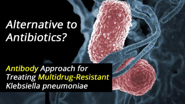 Alternative to Antibiotics: Antibody Approach for Treating Multidrug-Resistant Bacterial Infections