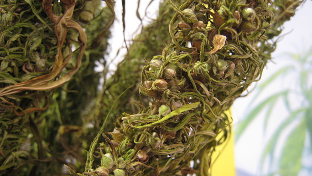 Analysis of Cannabinoids in Hemp Seed Oils by HPLC Using PDA Detection
