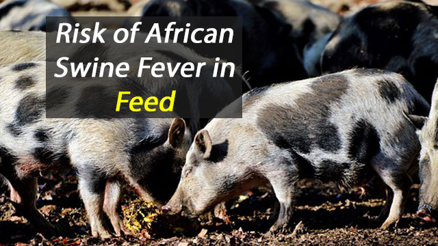 Animal Feed May Help Viruses Spread Around the Globe