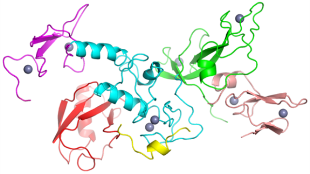 Tackling the mysteries of protein folding