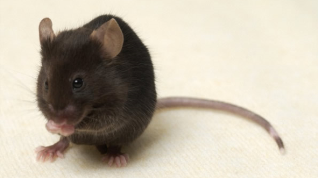 Mouse study advances our understanding of eating disorders