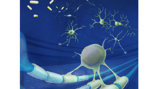 Drugs stimulate body's own stem cells to replace the brain cells lost in MS