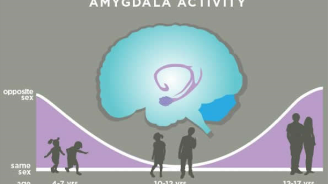Study: Amygdala encodes 'cooties' and 'crushes' in the developing brain