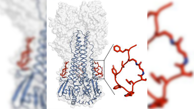 Artificial Peptides Block Infectivity of Influenza Virus
