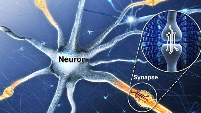 Artificial Synaptic Device Simulating the Function of Human Brain