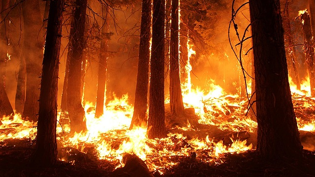 Ash from Wildfires Could be Protecting Us from Harm
