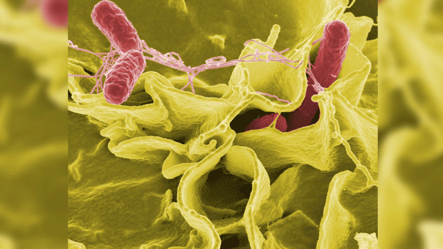 Bacteria-based Drug Delivery Could Radically Expand Cancer Treatment Options