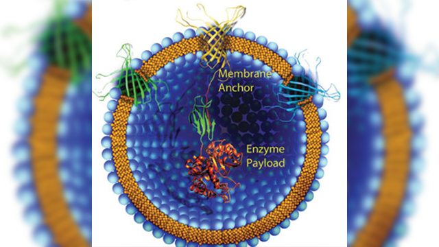 Bacterial Outer Membrane Vesicles Could Transform Vaccine Formulations
