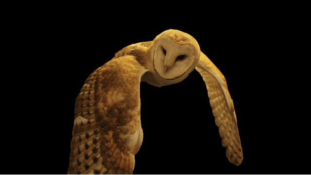 Barn Owls Help Explain How the Brain Pays Attention