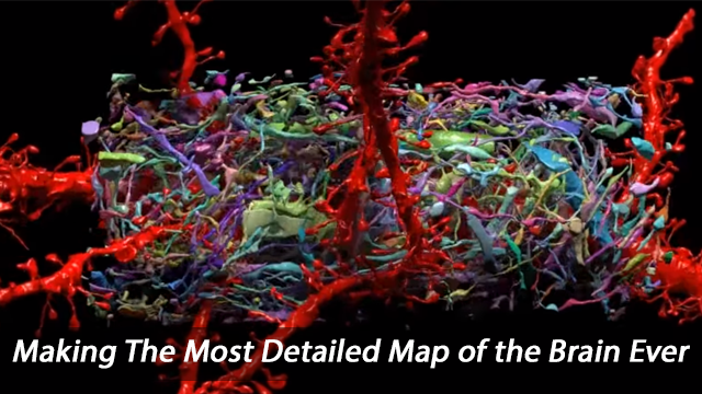 Beautiful 3-D Reconstructions of Brain Cells and All Their Synapses