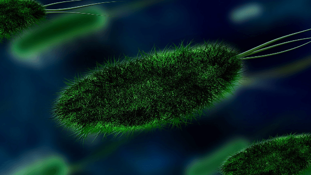 Biological Link Between Gut Microbiome and Parkinson's Disease