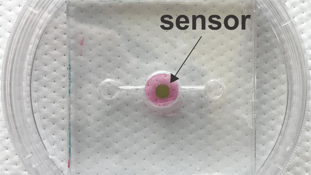 Biosensor Allows Real-Time Oxygen Monitoring for Organs-on-a-chip