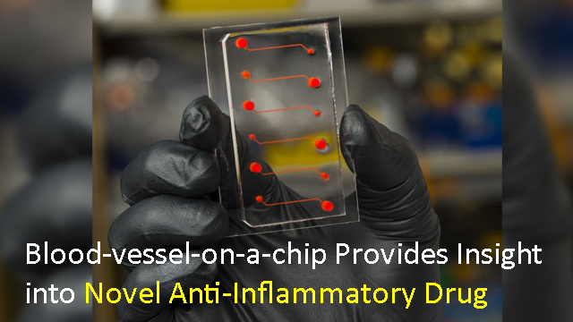 Blood-vessel-on-a-chip Provides Insight into Novel Anti-Inflammatory Drug Candidate