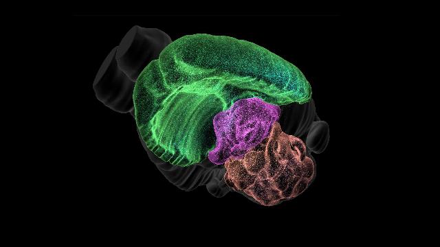 Blue Brain Project Releases Pioneering 3D Brain Cell Atlas
