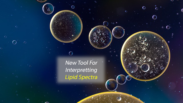 Boost for Lipid Research: Researchers Facilitate Lipid Data Analysis