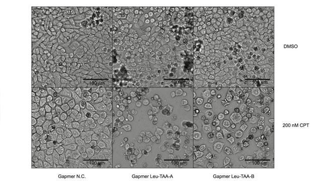 Boosting Tumor Cell Drug Sensitivity