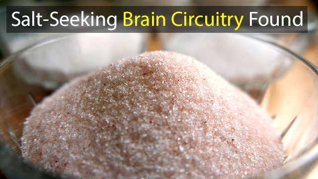 Brain Circuitry That Drives Sodium Intake Mapped