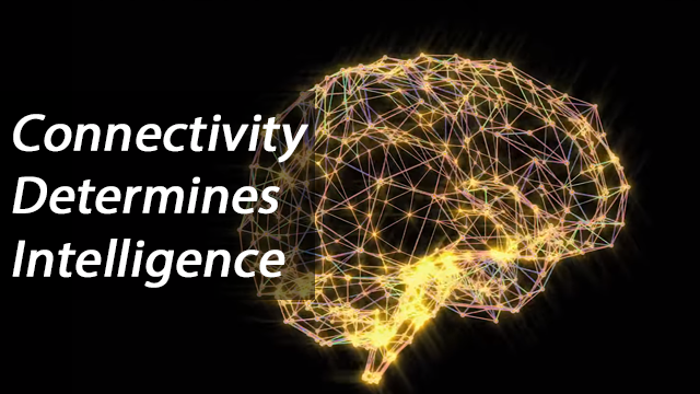 Brain Connectivity Determines Intelligence