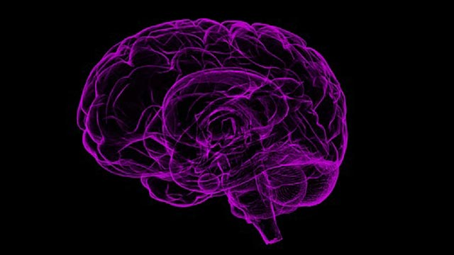Brain-derived Compounds Have Surprising Effect on Cancer Cells
