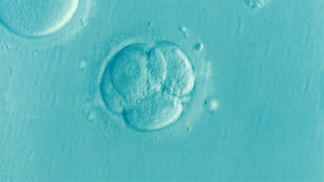 Breakthrough in Growing Human Embryos