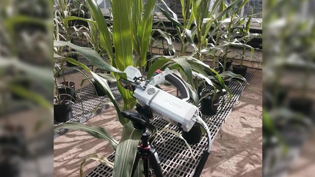 Breeding Corn for Water-use Efficiency May Have Just Gotten Easier