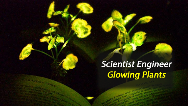Bringing 'Avatar'-Like Glowing Plants to the Real World