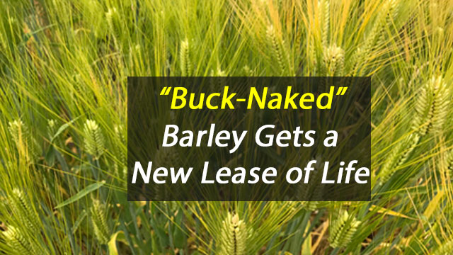 """Buck-Naked"" Barley Gets New Lease of Life"