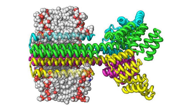 Building Transmembrane Proteins From Scratch